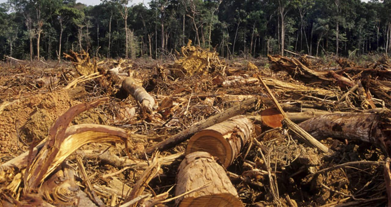 El gran problema de la deforestación en México