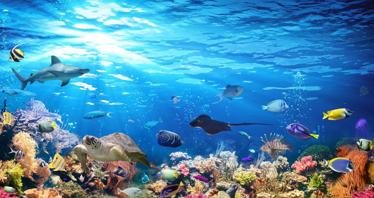 quiz mundo marino